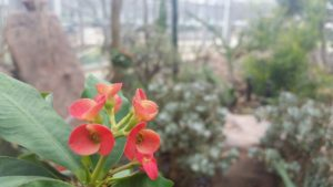 Unknown red flowers